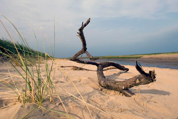 Drift wood on a Lincolnshire beach